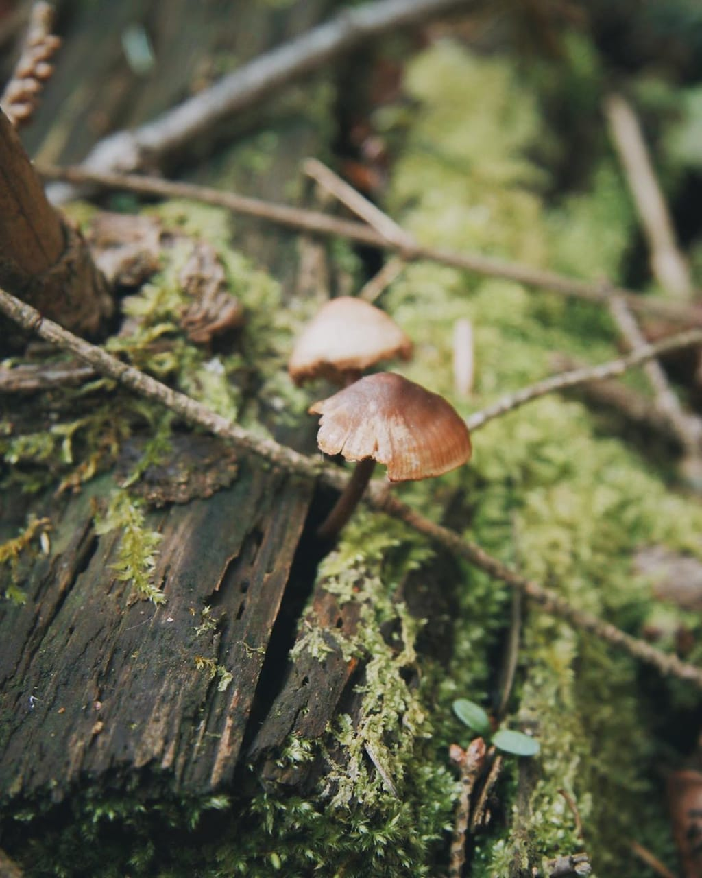forest, mushrooms, and nature image