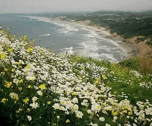 beach, beautiful, and gif image