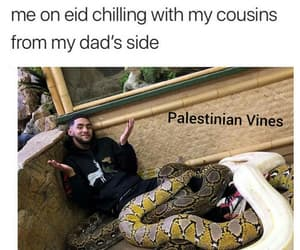 arabic, cousins, and relate image