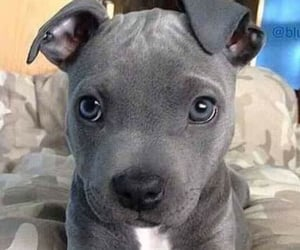 dog, animal, and pet image