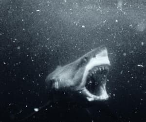 open wide and shark hangry image