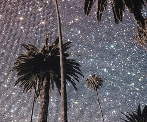 aesthetic, glitter, and palm trees image