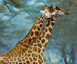 Animales, naturaleza, and jirafas image