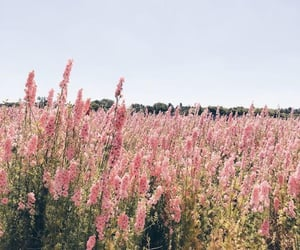 flowers, nature, and field image