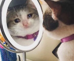 cat, crying, and crying cat image