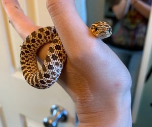 snake, boop, and snoot image
