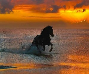 Animales, caballo, and atardecer image
