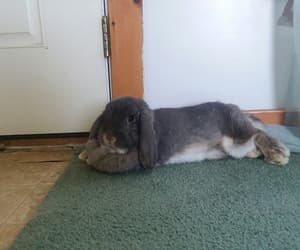 bunny and pet's image