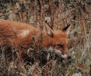 aesthetic, animals, and forest image