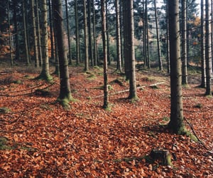 autumn, cozy, and tree image