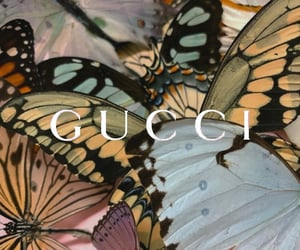 animals, buterfly, and colors image