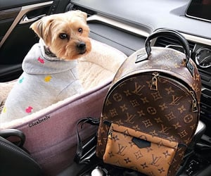 bag, car, and chanel image