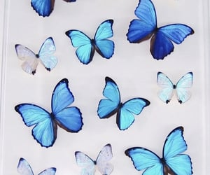 animals, blue, and butterflies image