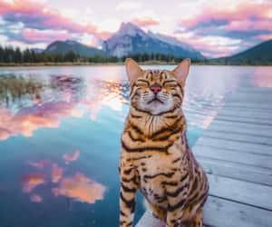 Adventure kitty on a trip to dreamland