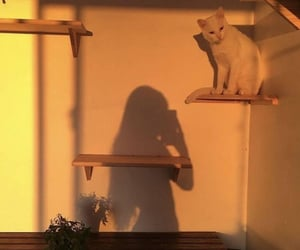 girl, cat, and aesthetic image