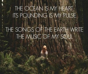 captions, forest, and music image