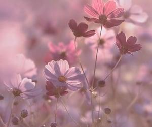 -La felicidad florece desde el interior.