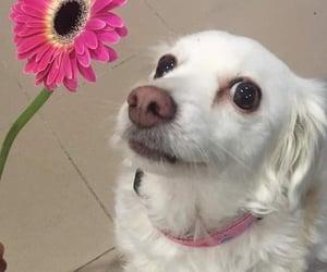 animals, dog, and flower image