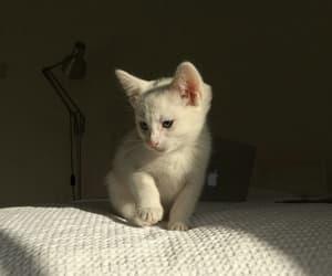 animals, cat, and art image