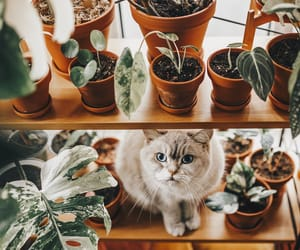 cat, cozy, and decor image