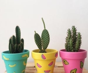 cactus, colors, and diy image