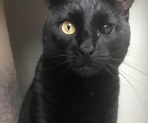 black cat and cat image