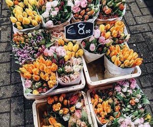flowers, netherlands, and 🇳🇱 image