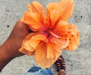flowers, orange, and summer image