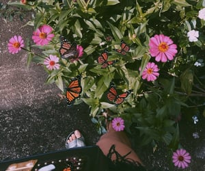 autoral, butterfly, and flowers image