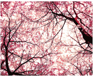 pink, tree, and flowers image