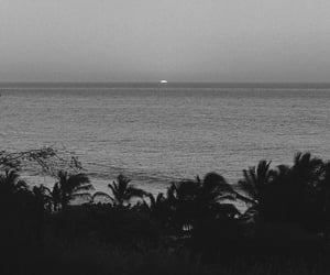 aesthetic, b&w, and nature image