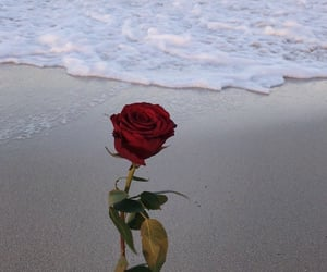 rose, beach, and flowers image