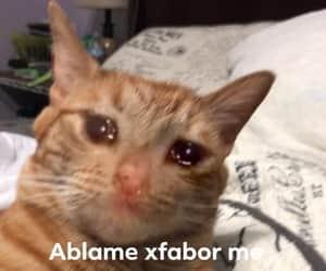 gatito, gato, and meme image