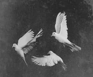 bird, Flying, and vintage image