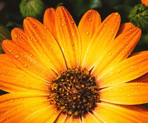 flower, waterdrops, and yellow image