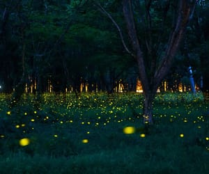 dark, fireflies, and nature image
