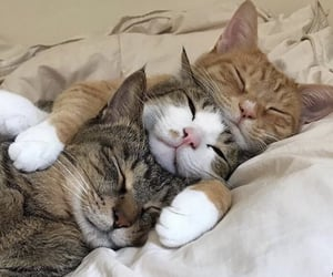 cat, animal, and babys image