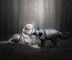 animals, foxes, and cute image