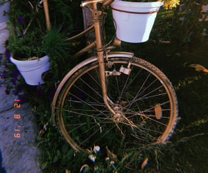 bicycle, photography, and vase image