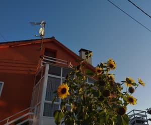 plants, sunflower, and vintage image