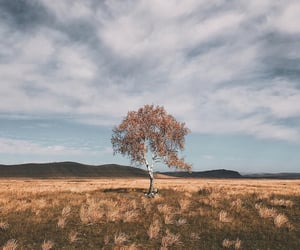 autumn, nature, and places image