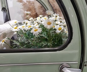 car, flowers, and daisy image