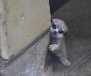 Japanese Photographer Captures A Shy-At-First Baby Meerkat And Its Family In 23 Pics | Bored Panda