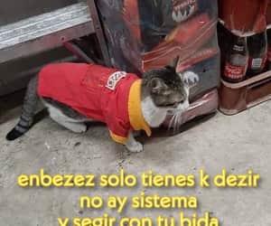 edit, gatito, and gato image
