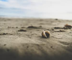 white seashell on beach sand