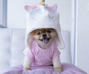 dog, pink, and unicorn costume image