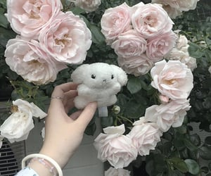 roses, white, and かわいい image