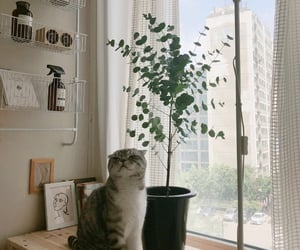 cat, aesthetic, and room image