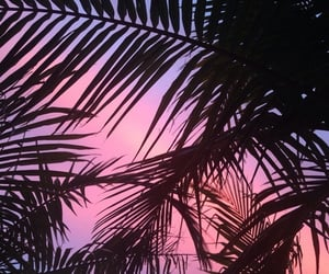 summer, tropical, and pink clouds image