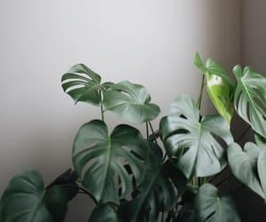 botany, life, and nature image